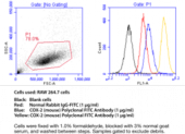 COX-<wbr/>2 (mouse) Polyclonal FITC Antibody