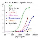 Rat PXR Reporter Assay System, 1 x 96-well format assays
