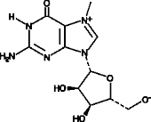7-<wbr/>Methylguanosine