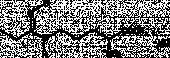 Methyl-<wbr/>L-<wbr/>NIO (hydro<wbr>chloride)