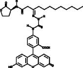 N-<wbr/>dodecanoyl-<wbr/>L-<wbr/>Homoserine lactone-<wbr/>3-<wbr/>hydrazone-<wbr/>fluorescein