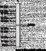 SET7/9 Polyclonal Antibody