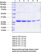 HO-1 (human recombinant)