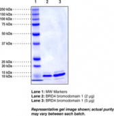 BRD4 bromodomain 1 (human recombinant; His-<wbr/>tagged)