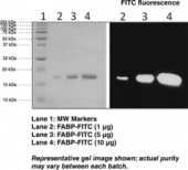 FABP4 (human recombinant) FITC conjugated
