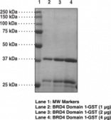 BRD4 bromodomain 1 (human, recombinant; GST-<wbr/>tagged)