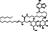 C12 NBD Lactosylceramide (d18:1/12:0)