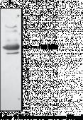 EP<sub>3</sub> Receptor Polyclonal Antibody