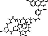 Phalloidin-<wbr/>Fluorescein Conjugate