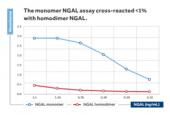 NGAL (human) monomer-specific ELISA Kit