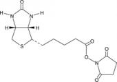 Biotin-<wbr/>NHS