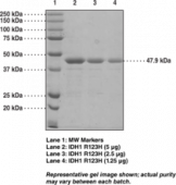 IDH1 R132H mutant (human recombinant)