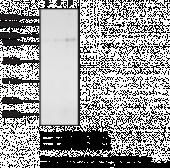 SREBP-2 Polyclonal Antibody - Biotinylated