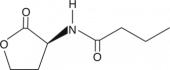 N-<wbr/>butyryl-<wbr/>L-<wbr/>Homoserine lactone