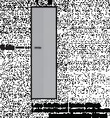 FFAR4 (GPR120) (C-Term) Polyclonal Antibody