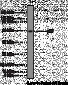 NF-<wbr/>κB (p65) NLS Polyclonal Antibody