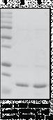 FABP4 (human recombinant)