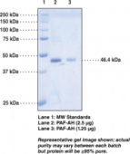 PAF Acetyl<wbr>hydrolase (human recombinant)