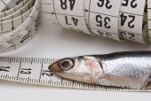 Atlantic salmon Vitellogenin Standard