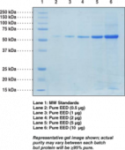 EED (human recombinant)