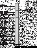 Toll-<wbr/>Like Receptor 7 Polyclonal Antibody