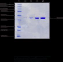 Formaldehyde Dehydrogenase (<em>P. putida</em> recombinant)