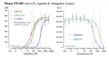 Mouse PPARδ Reporter Assay System, 3 x 32 assays in 96-well format