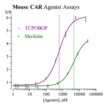 Mouse CAR Reporter Assay System, 1 x 96-well format assays