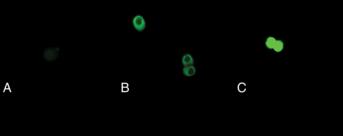 S-<wbr/>Glutathionylated Protein Detection Kit