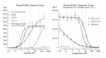 Human RARα Reporter Assay System, 1 x 96-well format assay