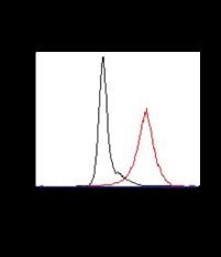 EP<sub>2</sub> Receptor Polyclonal PE Antibody
