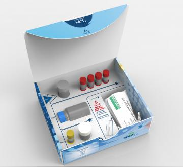 Glyco-SPOT DNA Repair Assay Kit