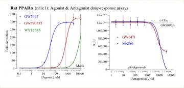 Rat PPARα Reporter Assay System, 3 x 32 assays in 96-well format