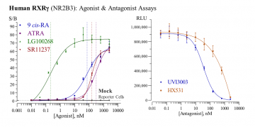 Human RXRγ Reporter Assay System, 3 x 32 assays in 96-well format