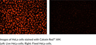 Calcein Red™ AM