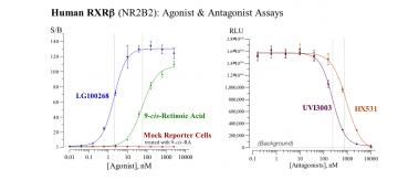 Human RXRβ Reporter Assay System, 1 x 384-well format assay