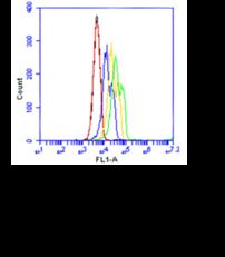 TIM4 Monoclonal Antibody