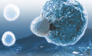 Cell Surface Marker Bertin Bioreagent