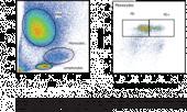 Phagocytosis Assay Kit (IgG PE)