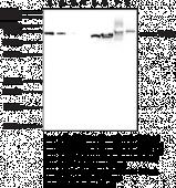 Hsp70 (HspA1A) Monoclonal Antibody (Clone 7F6)