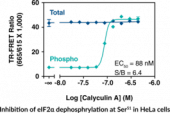 eIF2α (Total) and eIF2α (Phospho-Ser<sup>51</sup>) TR-FRET Kit