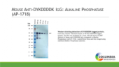 Mouse Anti-<wbr/>DYKDDDDK IgG:Alkaline Phosphatase