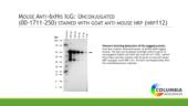 Mouse Anti-<wbr/>6HIS IgG:<wbr/>Unconjugated