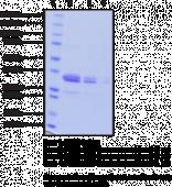 PPARα LBD (human recombinant)