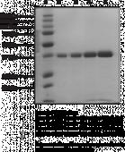 UHRF1 tudor-<wbr/>like region (human recombinant; His-<wbr/>tagged)