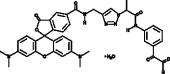 Citrulline-specific Probe-rhodamine