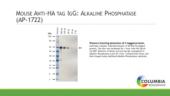 Mouse Anti-<wbr/>HA IgG:Alkaline Phosphatase