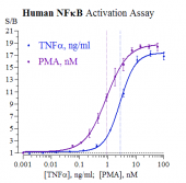 Human NF-kB Reporter Assay System, 3 x 32 assays in 96-well format