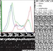 Phagocytosis Assay Kit (IgG-DyLight™ 633)