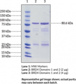 BRD4 bromodomains 1 and 2 (human, recombinant; aa 2-477)